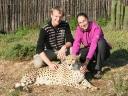 cheetah-33